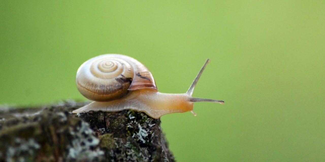 10 remèdes contre un dashboard WordPress lent, ou simplement pour avoir un wp-admin + rapide
